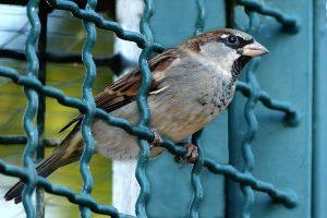 bird-984559_640